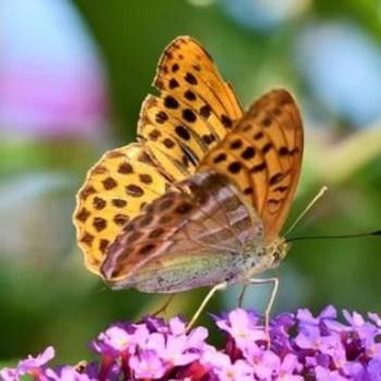 Vlindertjes Sprankel methodeschool Jenaplan